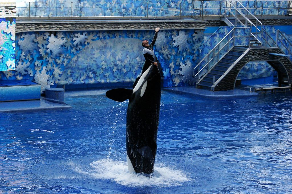 SeaWorld CEO Resigns Due to Falling Profits