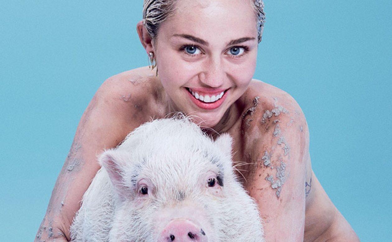 miley pig