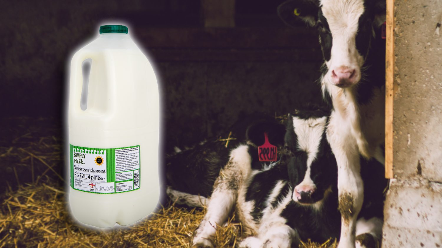 Milk Can Now Be Labeled As 'Inhumane'