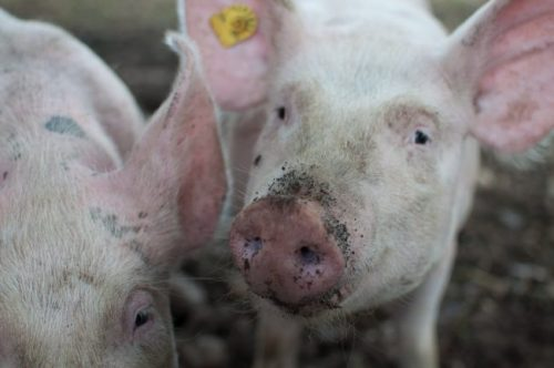 New Sustainability Index Reveals Meat Industry's Failure to Combat Climate Change