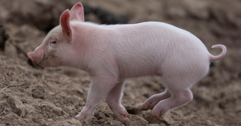 Vegan Advertisement Set to Screen to Millions in Cinemas Nationwide