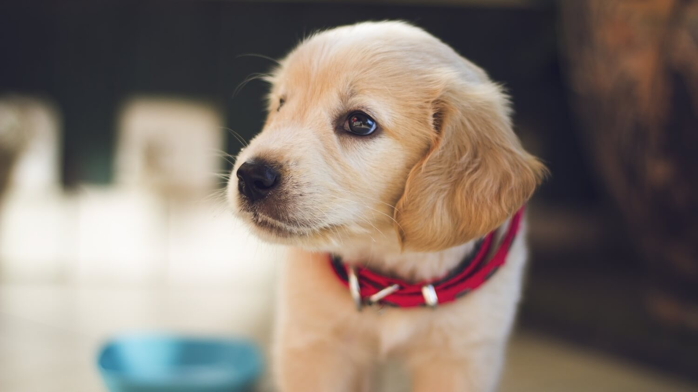 California Bans Puppy Mills Sales at Pet Stores