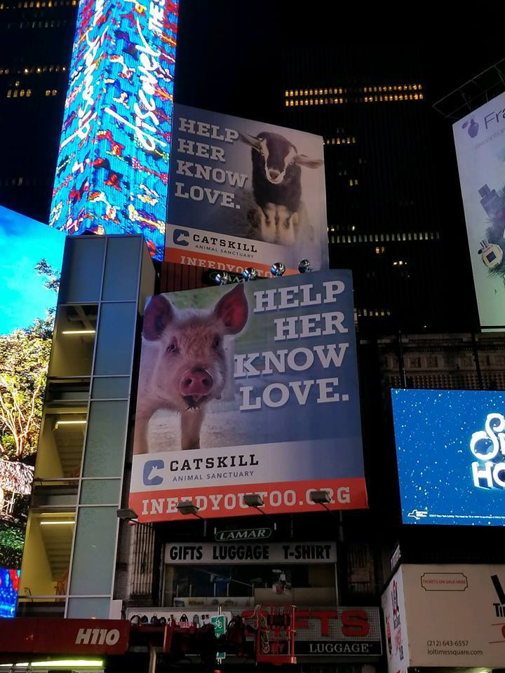 'Go Vegan' Billboard Campaign Arrives in Times Square