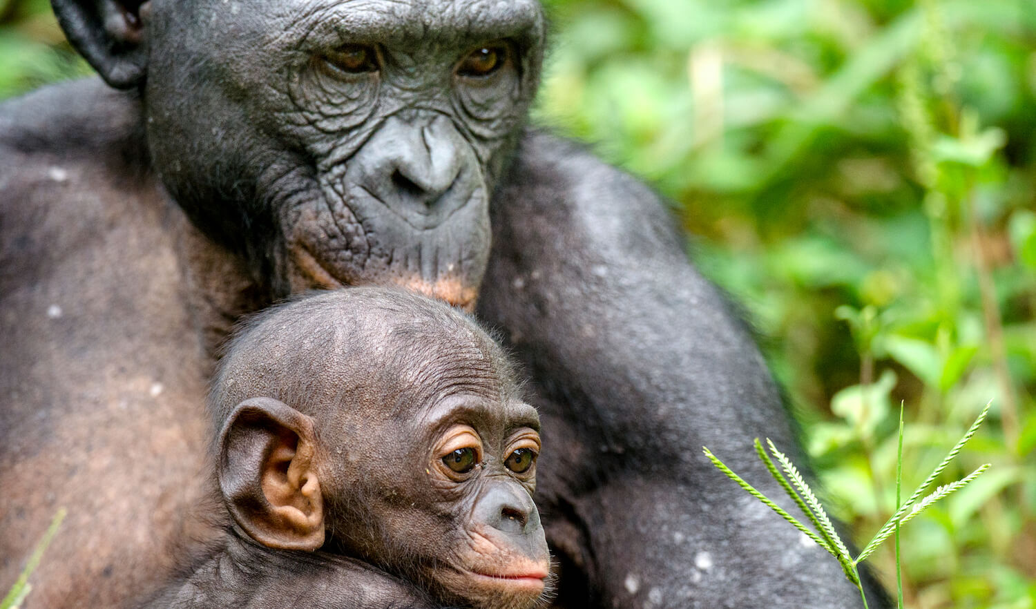 Shutterstock Bans Photos of Primates in Unnatural Settings