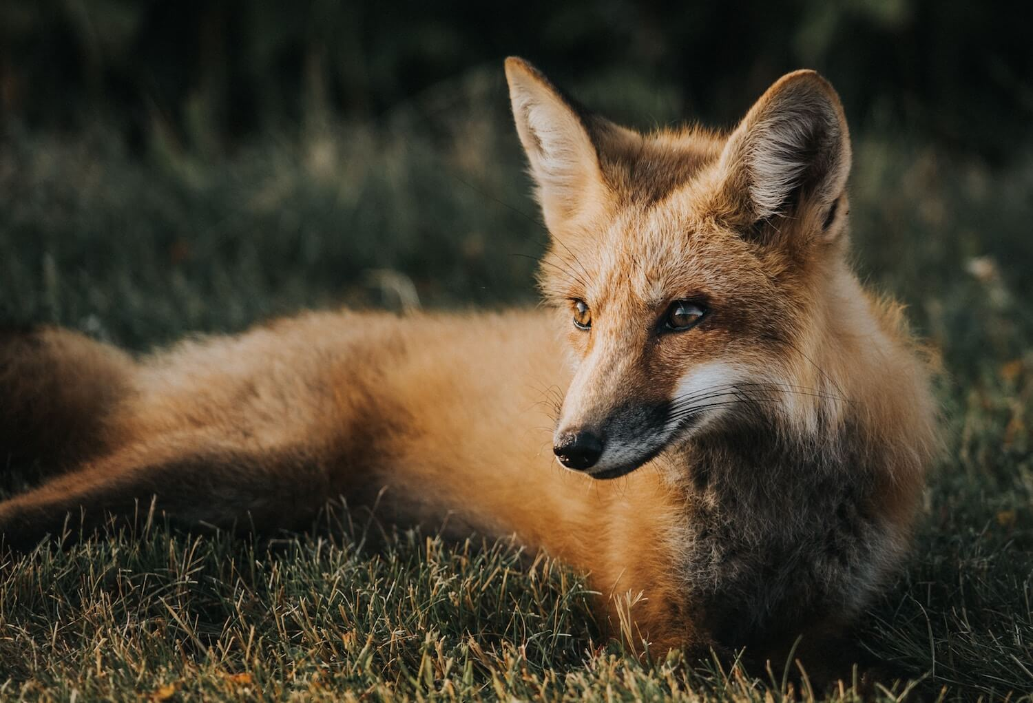 9 Things You Probably Didn't Know About the Fur Industry