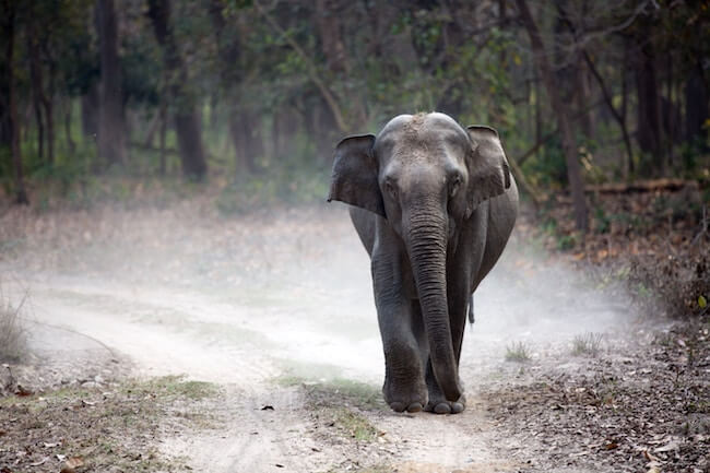China's Ivory Ban 'A Huge Step for Elephants'