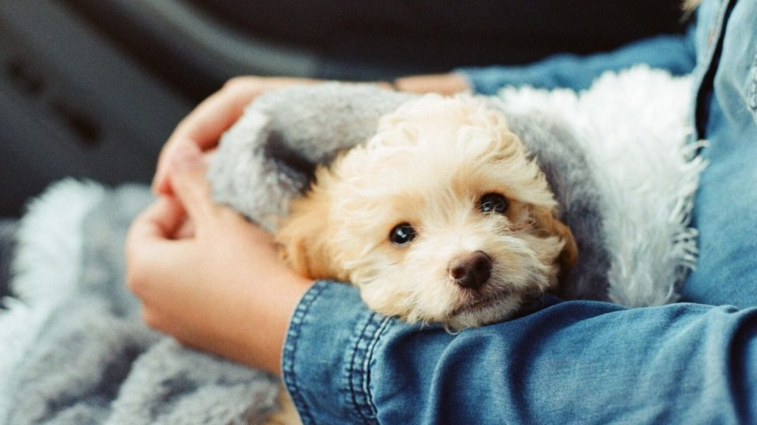 5 Ethical Ways to Have a Dog for Christmas (And Any Other Time of the Year)