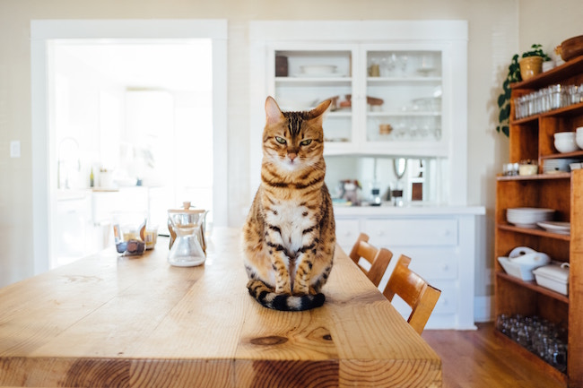 5 Cat Food Considerations for the Vegans Who Love (and Feed) Them5 Cat Food Considerations for the Vegans Who Love (and Feed) Them