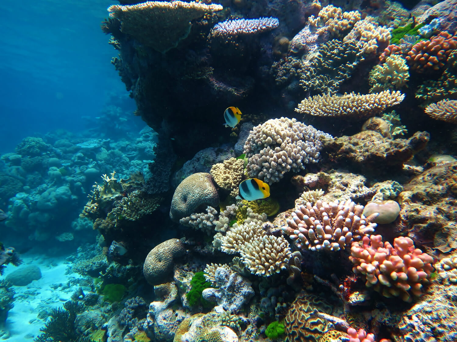 David Attenborough Warns Great Barrier Reef Will Be Dead By