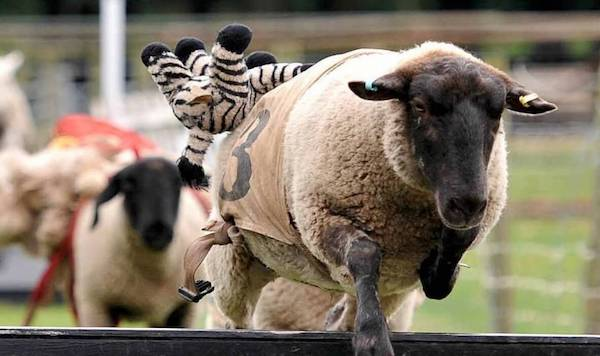 Sheep Race 2