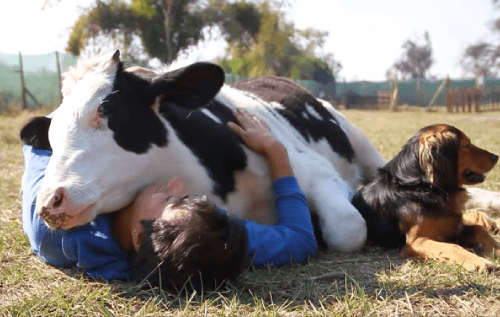 8 Facts to Remind You of Why You Went Vegan