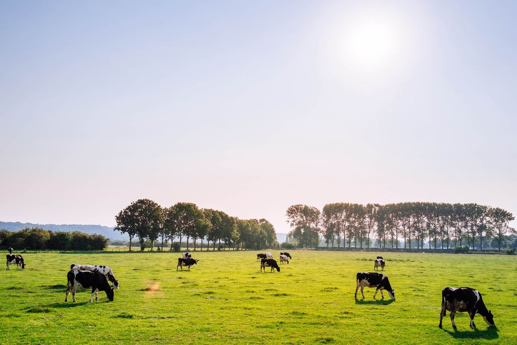 Reducing Meat Consumption Necessary for a Sustainable Future, Says Dutch Environmental Council
