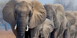 UK Government Implements One of the World's Toughest Bans on Ivory