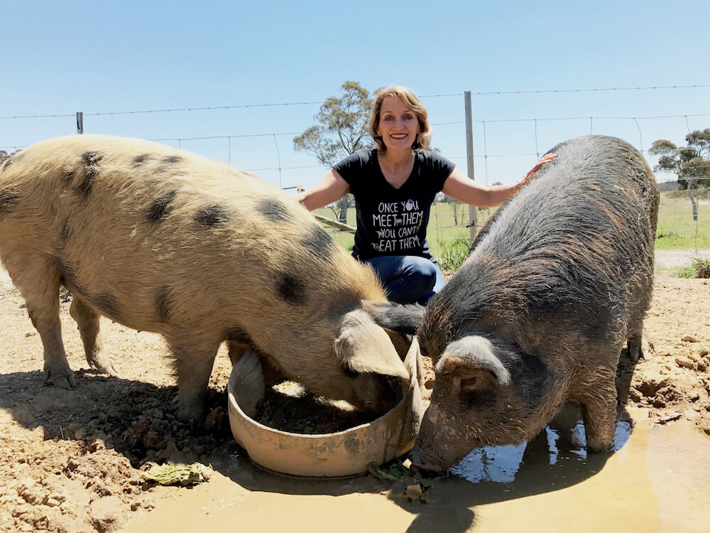 Clare Mann Pigs