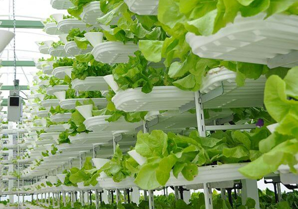 Princeton Brings Hydroponic Vertical 'Farm-to-Cafeteria' Program to Elementary School