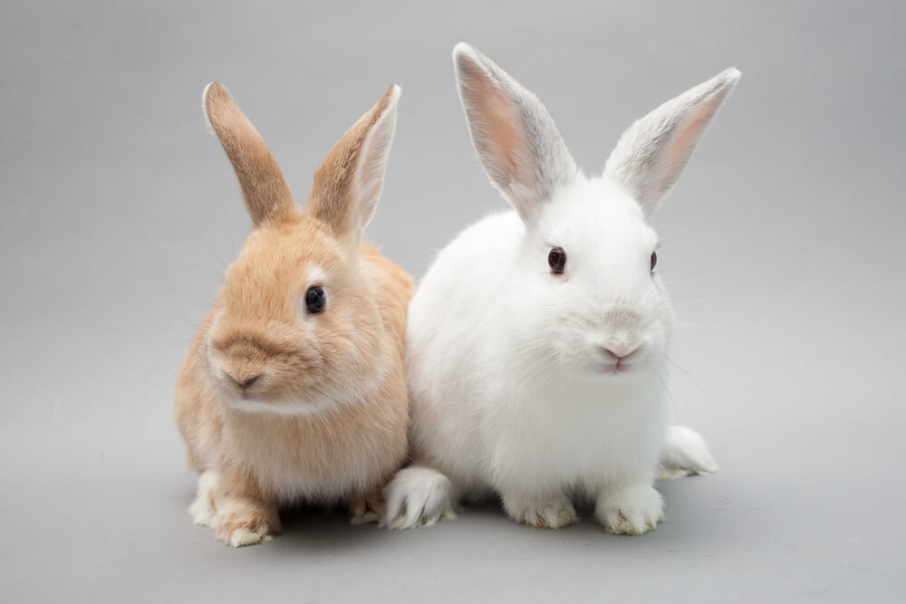 European Parliament to Support Global Cosmetic Animal Testing Ban