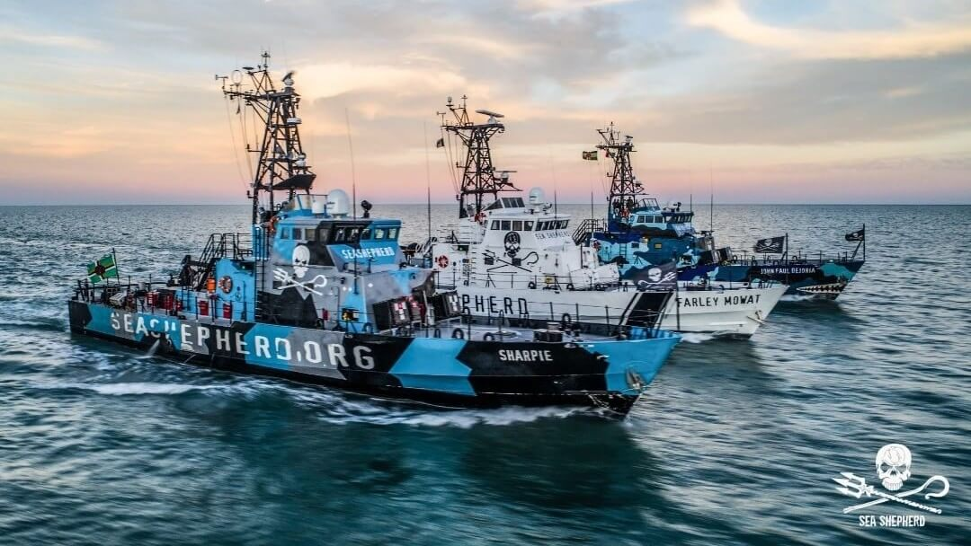 Vegan Non-Profit Sea Shepherd Shuts Down World's Largest Fishing Vessel Following Illegal Overfishing