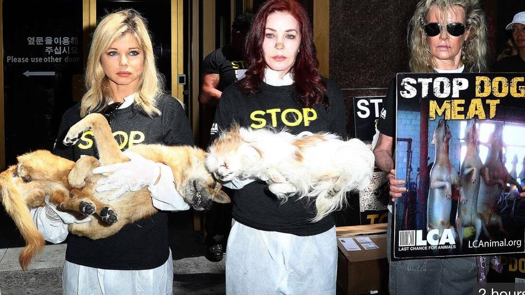 Priscilla Presley and Kim Basinger Protest With Dead Dogs Against South Korean Dog Meat Trade