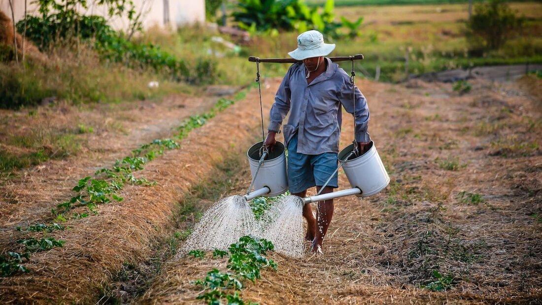 soy bean farmer watering crops