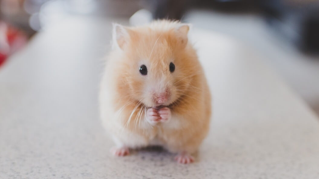 Animal Testing at Its Lowest Level Since 2010, Says New Study