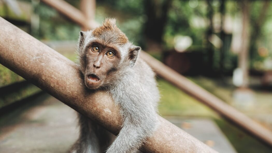 Airline AirBridgeCargo Bans Transport of Live Primates to Animal Testing Facilities