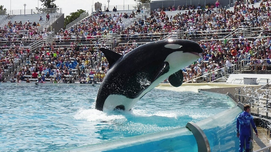 Travel Giant Thomas Cook Pulls SeaWorld Tickets Over Marine Animal Abuse