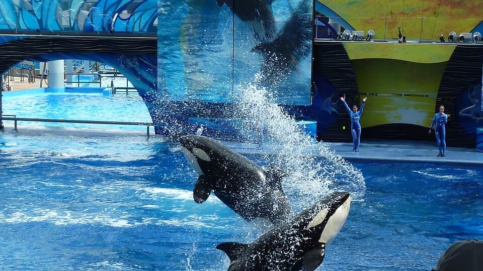 seaworld animal abuse