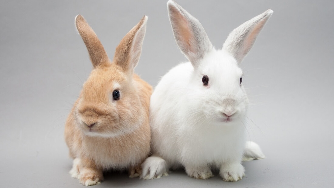 Meat Company Bans Animal Testing , Confuses Everybody