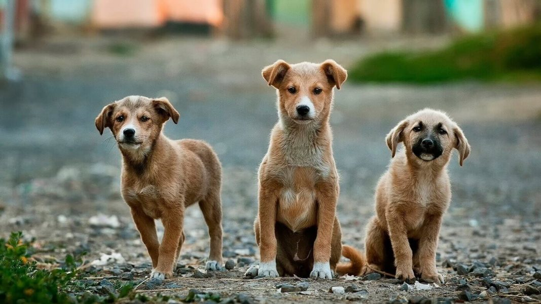 Indonesian Government Bans Dog and Cat Meat Trade