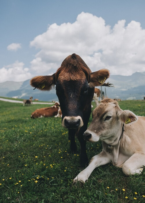 Is Grass-Fed Beef Really Sustainable?