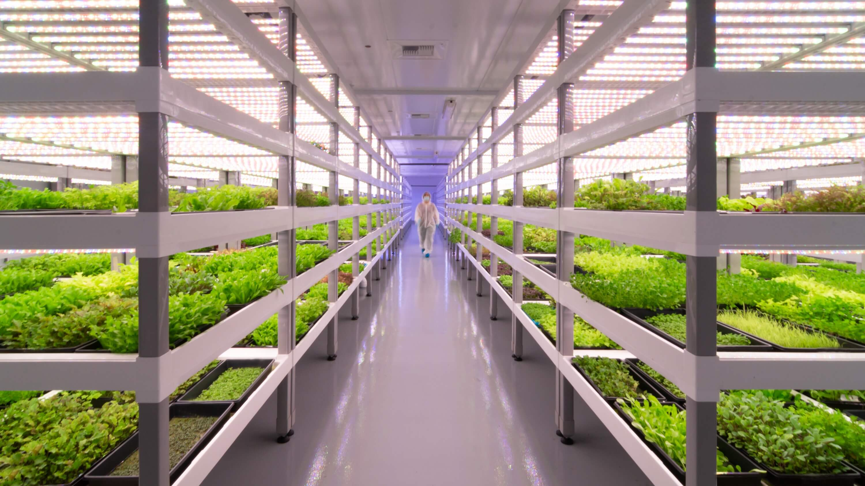 Giant Las Vegas Vertical Farm to Produce 1 Million Pounds of Produce Each Year