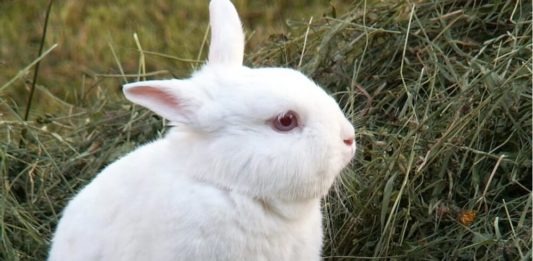 Colombia Will Ban All Cosmetic Animal Testing by 2024