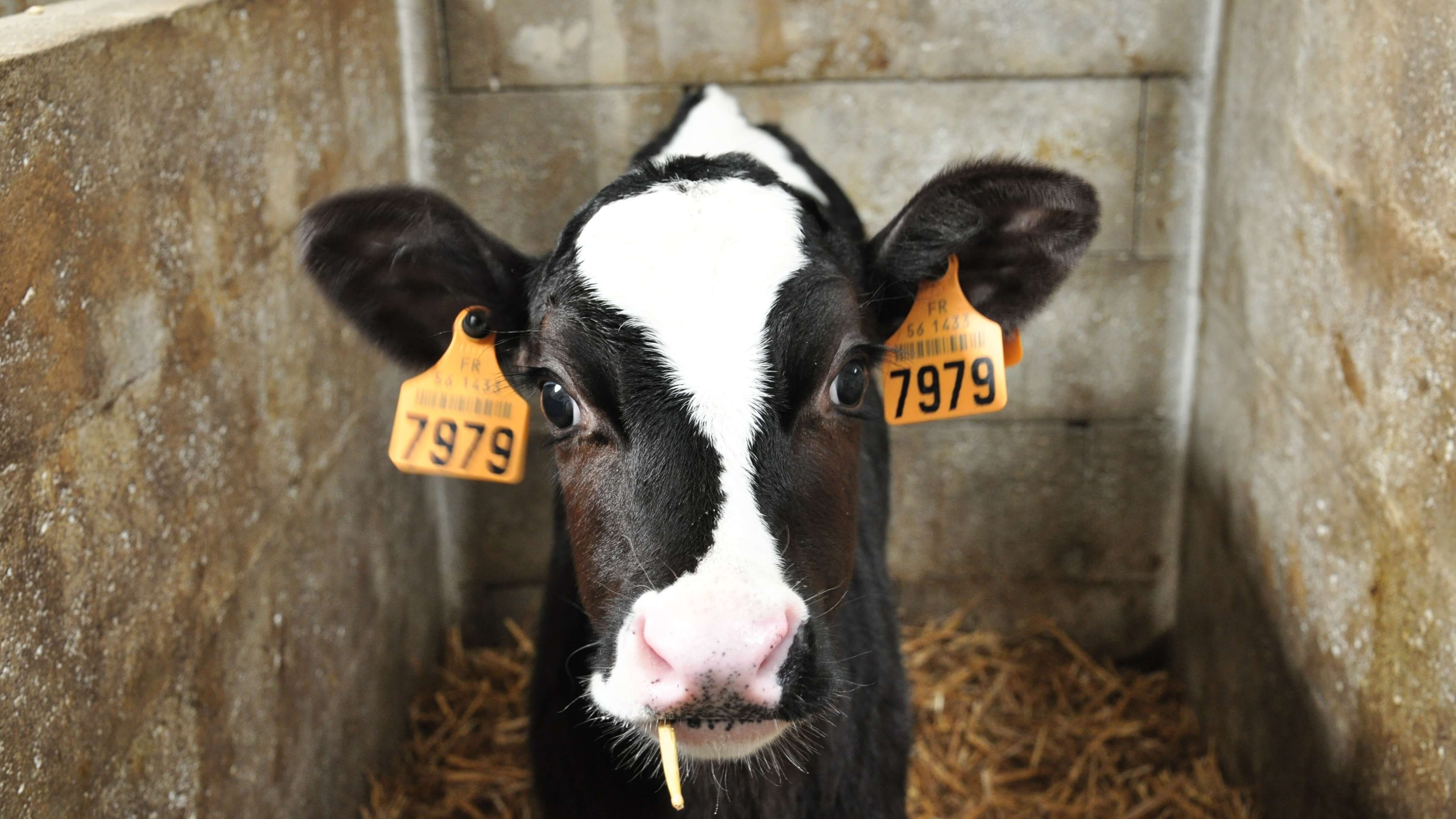 The BBC Reveals 'The Dark Side of Dairy' in New Series 'Disclosure'