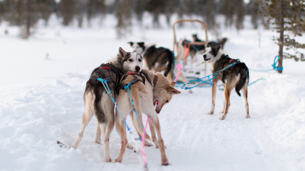 'Misled' Alaska Iditarod Dog Handler 'River' Mike Cranford's Dying Wish: Free the Dogs
