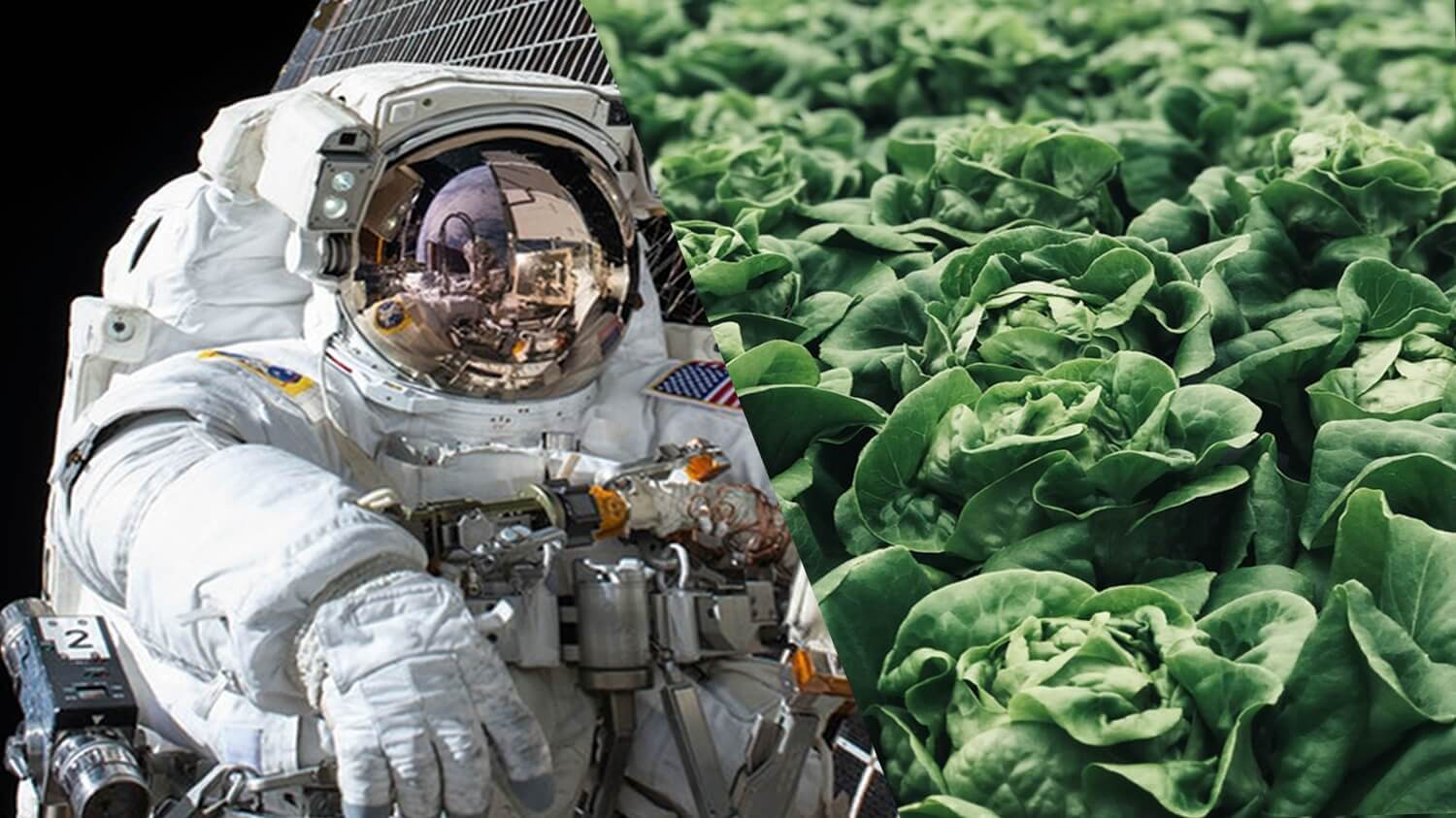 NASA's 'Veggie' Is Growing Vegetables for Astronauts in Outer Space