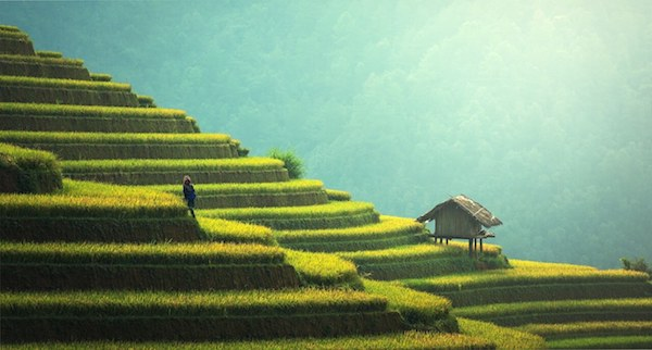 Ubud Bali Vegan Paradise