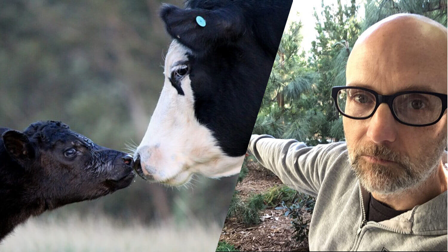 Vegan Celeb Moby Says Dairy Cow Moms Belong With Their Babies, Too