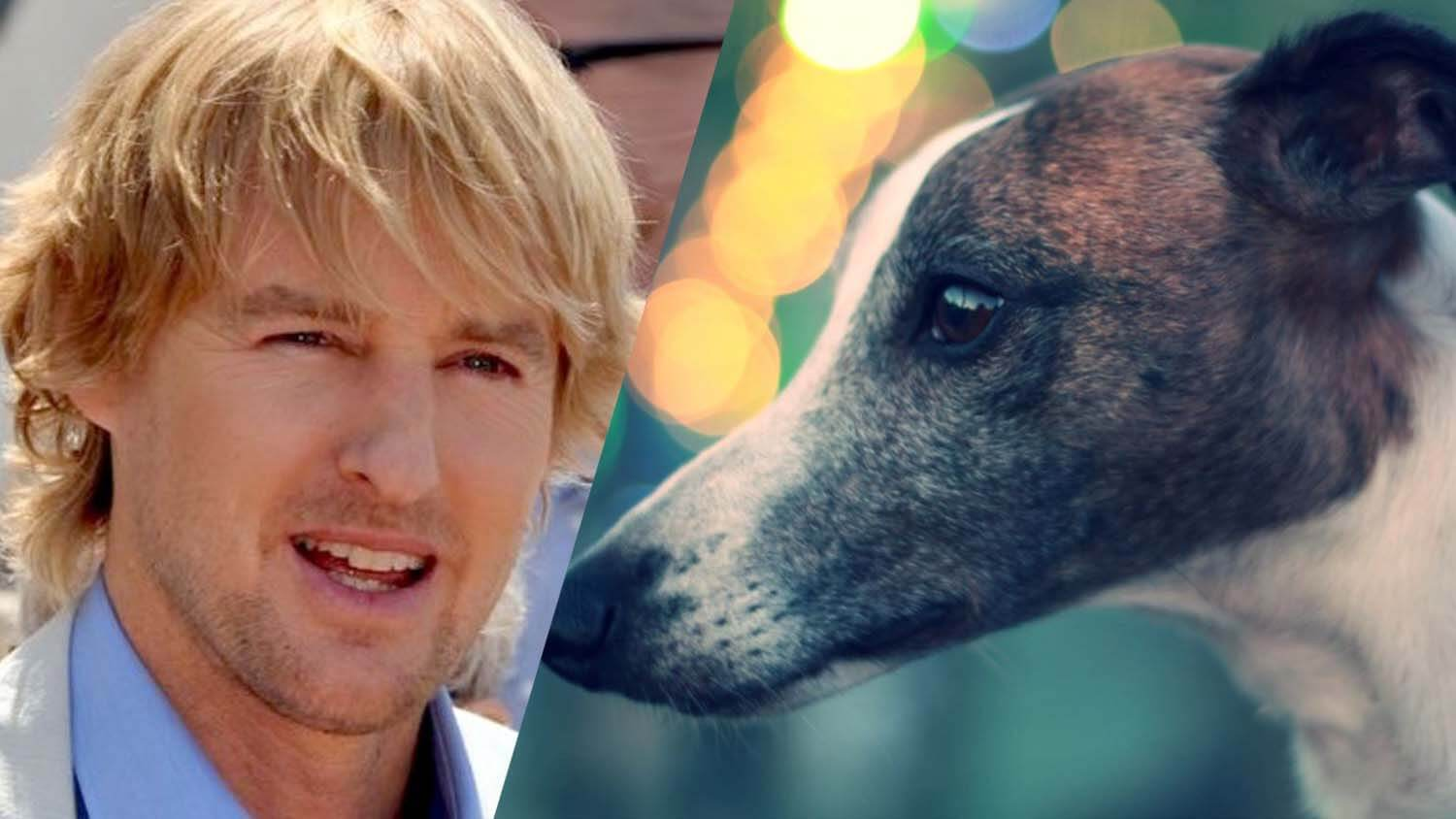 Ellen DeGeneres, Uzo Aduba, and Owen Wilson Fight to End Florida's Greyhound Racing Industry