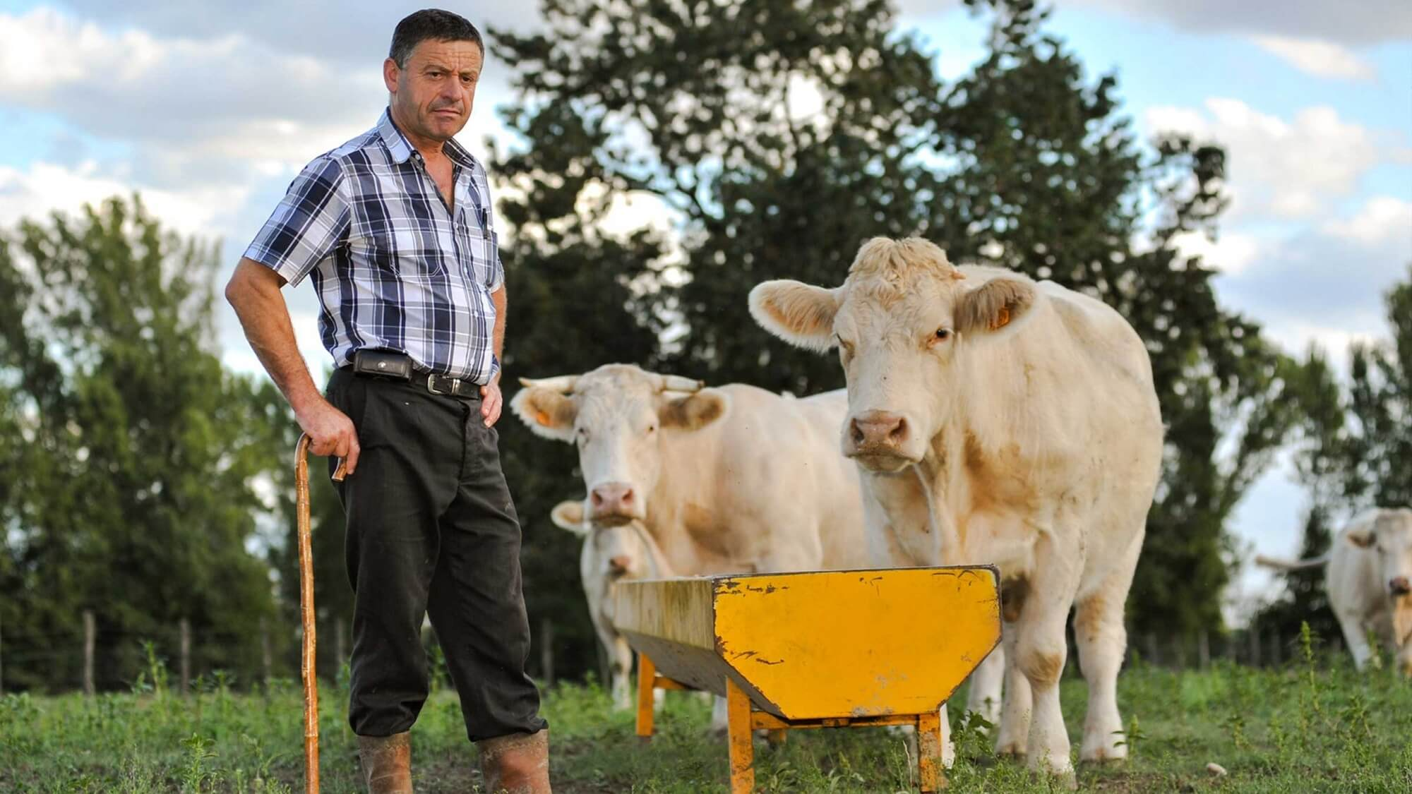 Greenpeace Urges New Zealand to Protect Climate By Banning New Dairy Farms