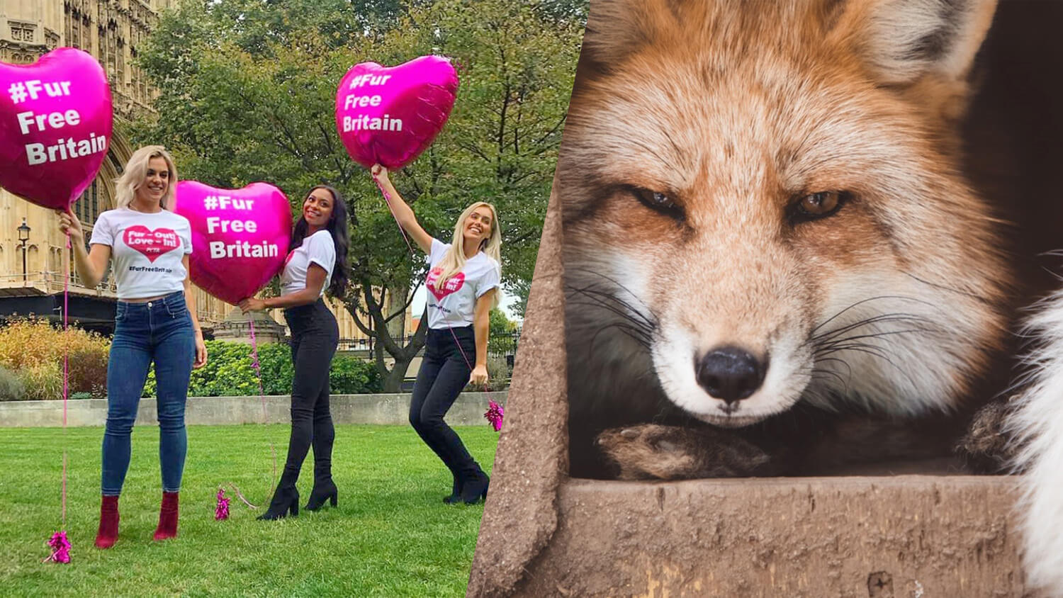 'Love Island' Stars Samira Mighty, Laura Anderson, and Laura Crane Urge Parliament to Go Fur-Free