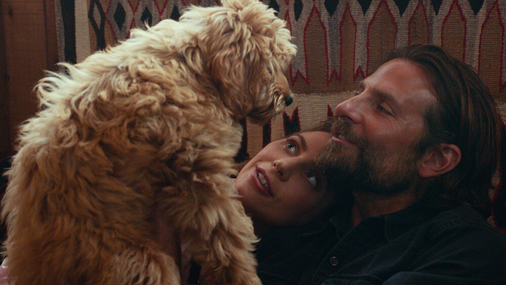 Bradley Cooper Receives 'Compassion in Film Award' For Casting His Rescue Dog in 'A Star is Born'