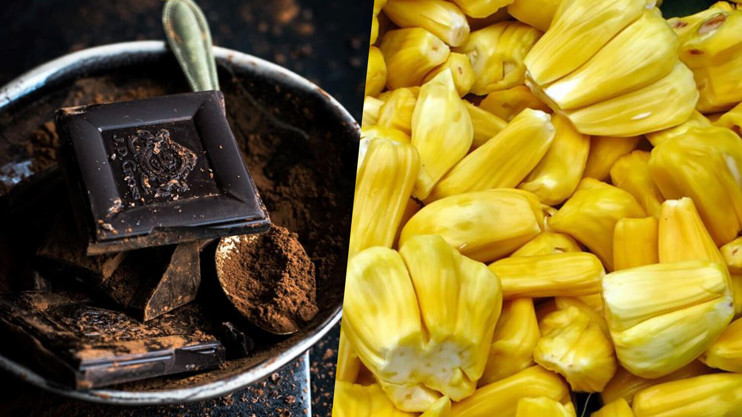 Chocolatey Aroma of Roasted Jackfruit Seeds Could Relieve Strain on Cocoa Industry, Says New Study