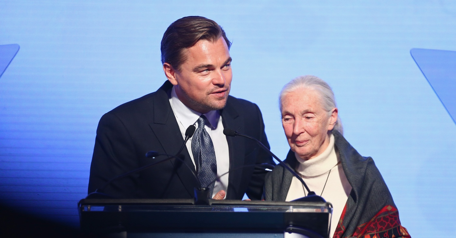 Leonardo DiCaprio and Jane Goodall Launch Vegan Clothing Line 'Don't Let Them Disappear' for Ape Conservation