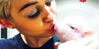 Vegan Celeb Miley Cyrus Loses Home But Rescues Animals From California Wildfires