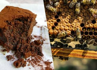Your Vegan Edibles Could Be Saving Bees From Extinction