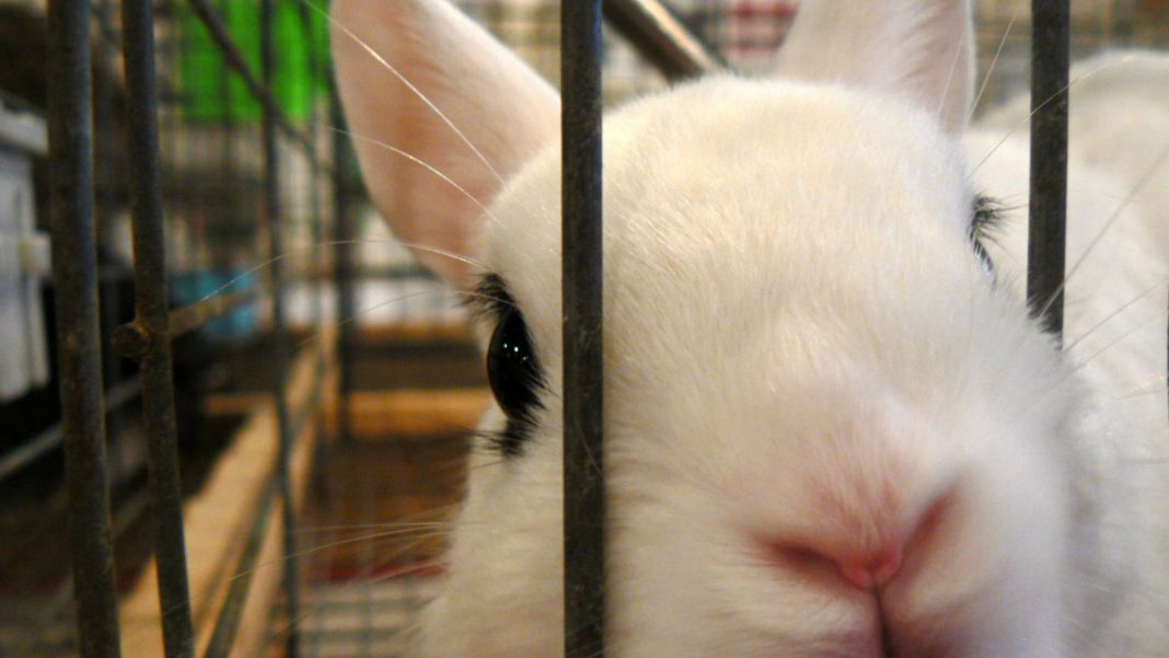 University of Windsor Receives $1 Million CAD to Research Cruelty-Free Animal Testing Alternatives