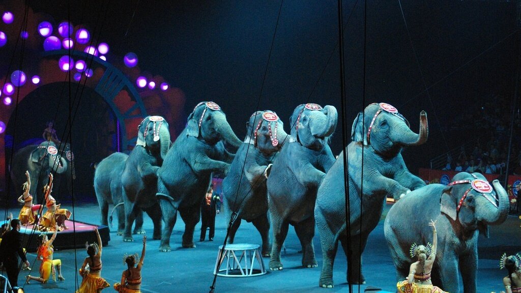 Parliament Bans Wild Animal Circuses in Portugal