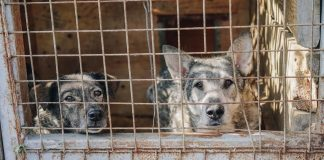 South Korea Shuts Its Largest Dog Meat Slaughterhouse