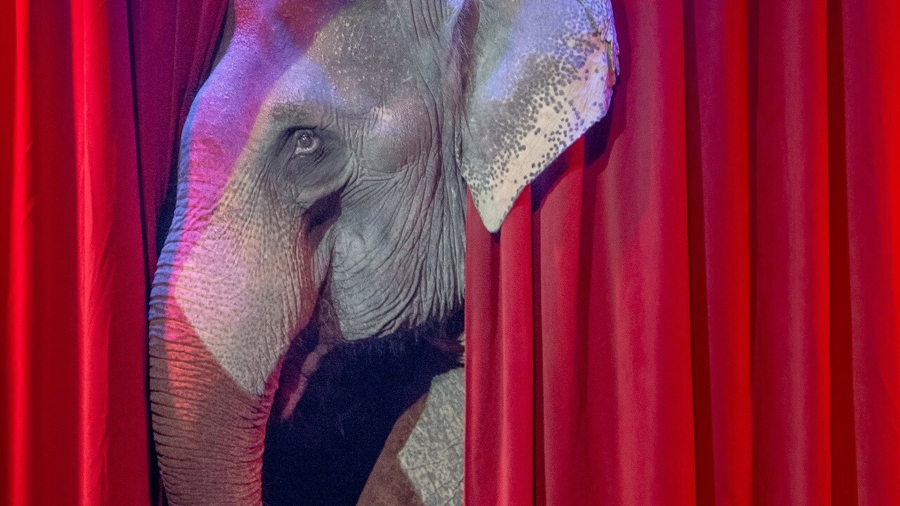 New Jersey Governor Phil Murphy Expected to Sign Ban on Wild Animal Circuses
