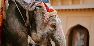 The NGO Wildlife SOS Opens India's First Elephant Hospital